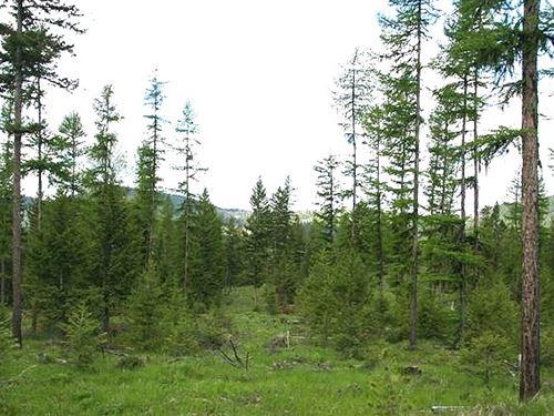 162.65 Acres in Kalispell, MT : Kalispell : Flathead County : Montana