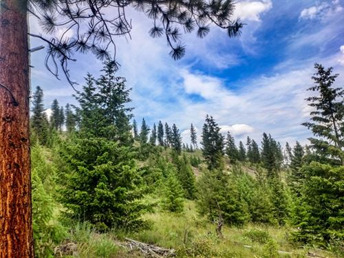 314.72 Acres in Superior, MT : Superior : Mineral County : Montana
