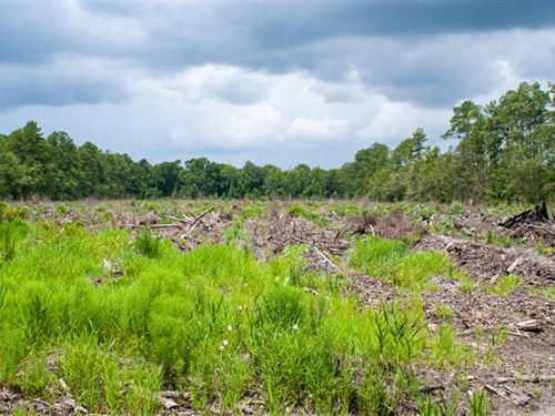 20.03 Acres in Walterboro, SC : Walterboro : Colleton County : South Carolina
