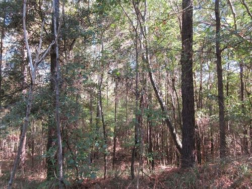 533.29 Acres in Camden, AL : Camden : Wilcox County : Alabama