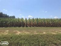 120 Acre Row Crop Farm : Keo : Lonoke County : Arkansas