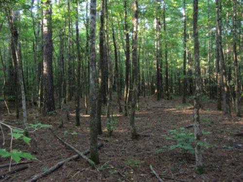 20 Acres In Alcorn County In Rienzi : Rienzi : Alcorn County : Mississippi