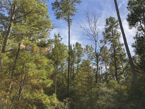 69 Ac Waterwood Estates Tr 13 : Huntsville : San Jacinto County : Texas
