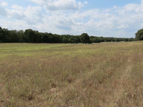 40+/- Acres In Milam County : Thorndale : Milam County : Texas