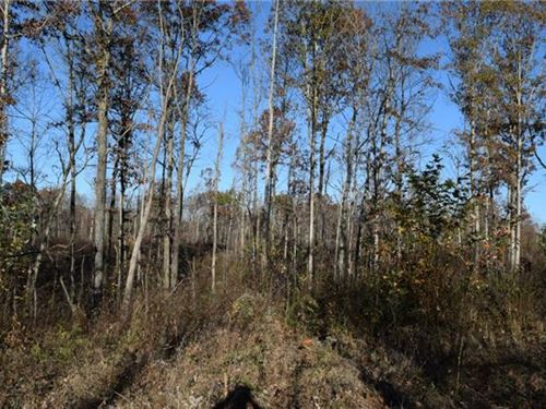 Rare Find Hunter's Dream : Altamont : Grundy County : Tennessee