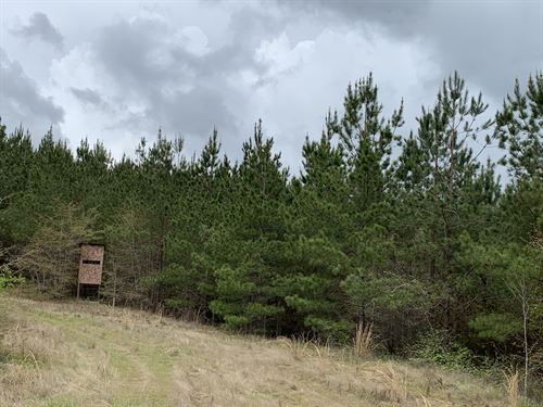 Recreational& Pine Plantation Tract : Marion : Perry County : Alabama