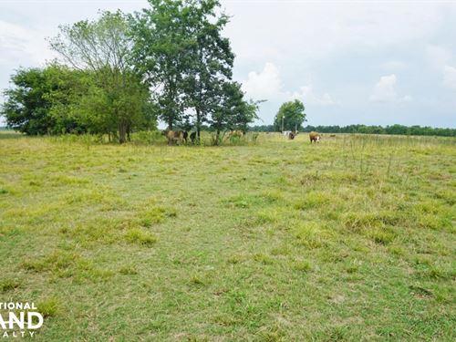 Little Prairie Creek Pasture And Hu : Greensboro : Hale County : Alabama