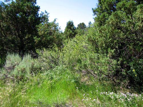 Many Trees, Near Public Land,235/Mo : Fort Garland : Costilla County : Colorado