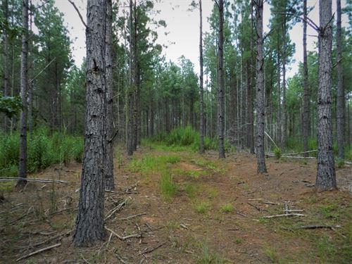 Lake Country Timber Investment : Greensboro : Greene County : Georgia