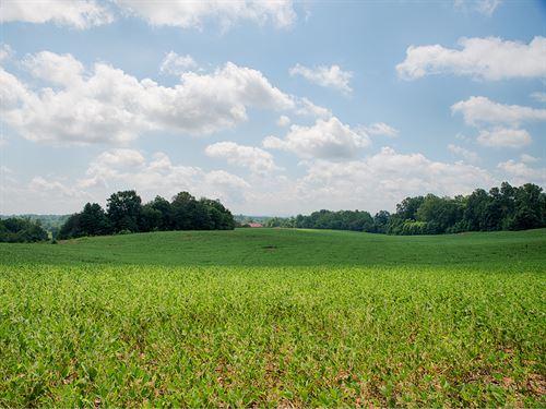 85 Acres On Rt 29 : Madison : Virginia