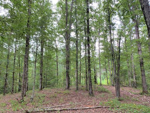 Montgomery Woods : Maxeys : Oglethorpe County : Georgia