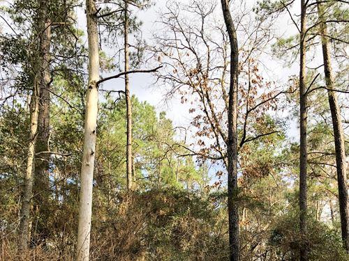 76 Acres Levi Road : Willis : Montgomery County : Texas