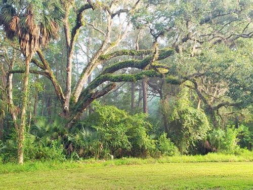 Saar Sanctuary : Fort McCoy : Marion County : Florida