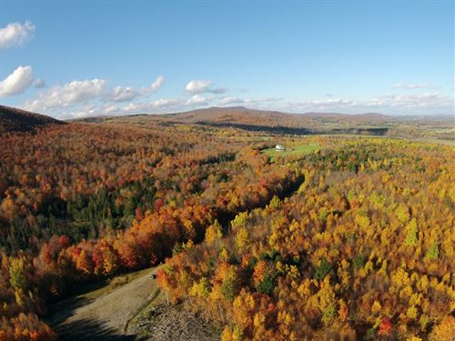 School Forest : Irasburg : Orange County : Vermont