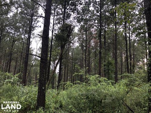 Abundant Wildlife And Prime Locatio : Morton : Scott County : Mississippi