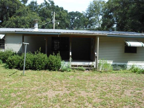 Beautiful, Secluded From Neighbors : O'brien : Suwannee County : Florida