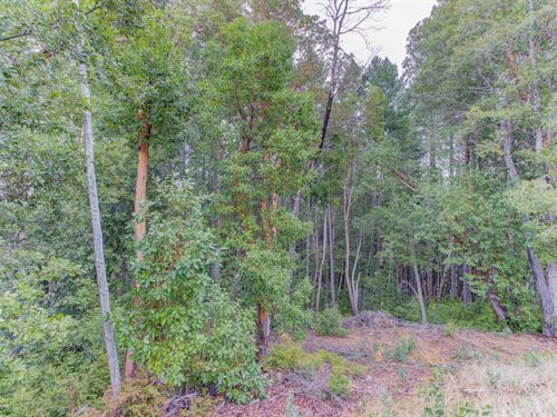 Wooded & Peaceful Land In Humboldt : Alderpoint : Humboldt County : California