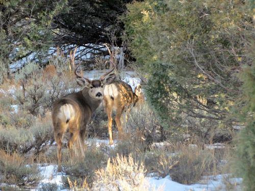 Pinon Hills Ranch Lots 44 & 45 : Pagosa Springs : Archuleta County : Colorado