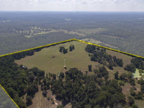 244 Acres Cr 2804 : Alto : Cherokee County : Texas