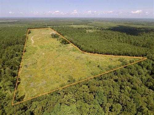 41 Acres Calhoun Co, Hampton : Hampton : Calhoun County : Arkansas
