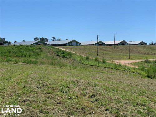 Chicken Farm Near Carthage Mississi : Carthage : Leake County : Mississippi