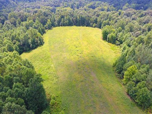Beautiful Cattle, Row Crop OR Recr : Indian Mound : Stewart County : Tennessee