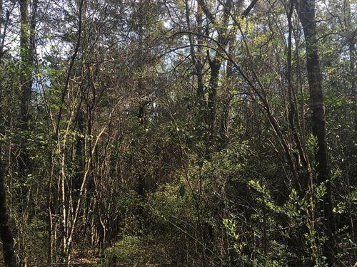 Secluded Timberland Near Samson : Samson : Geneva County : Alabama