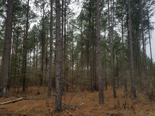Saline River Tract : Lacey : Drew County : Arkansas