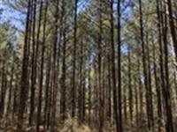 Hwy 331/Cr70 Covington County, Al : Opp : Covington County : Alabama