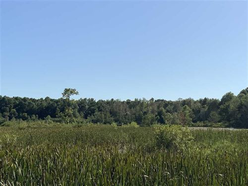 59 Acres With Duck Hole on The Mid : Paris : Henry County : Tennessee