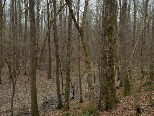 Hardwood Bottomland And Pine Tract : Monticello : Drew County : Arkansas