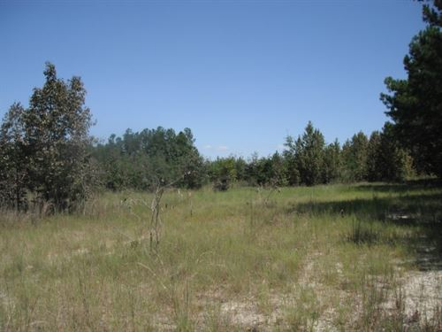 142 Acres, Chesterfield County, Sc : Cheraw : Chesterfield County : South Carolina