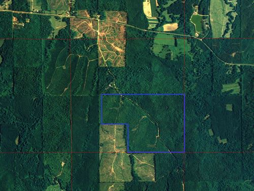 Small Tract With Road Frontage : Sweetwater : Marengo County : Alabama