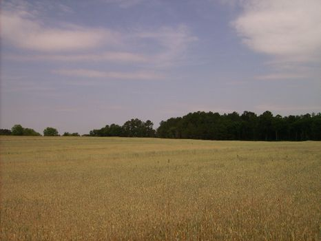 Excellent Home Site or Pasture Land : Vienna : Dooly County : Georgia