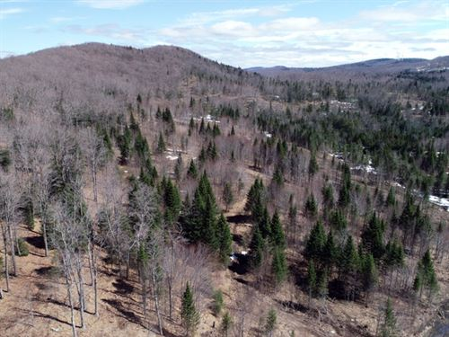 Sheffield Heights Forest : Sheffield : Caledonia County : Vermont