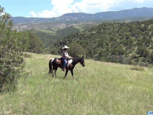Lucky V Ranch : Silver City : Grant County : New Mexico