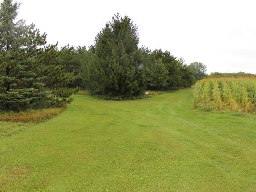Stearns County Hunting Land : Belgrade : Stearns County : Minnesota