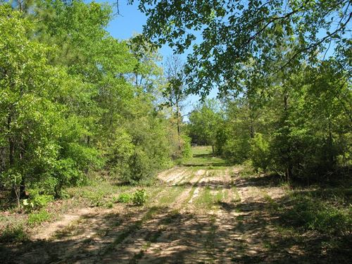 Well Established Hunting Land : Prattville : Autauga County : Alabama