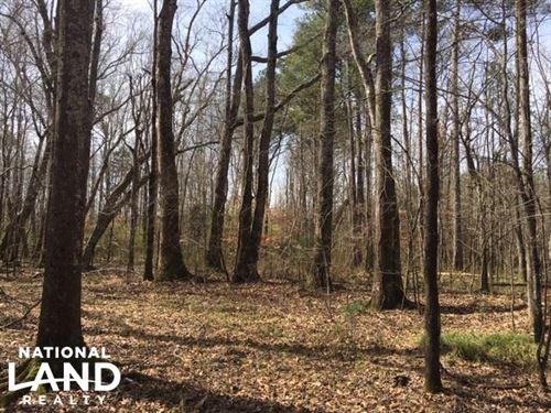 Hamilton Hunting & Timber Tract : Hamilton : Marion County : Alabama