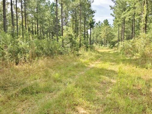 37 Acres Hunting Timberland Propert : Collinsville : Kemper County : Mississippi