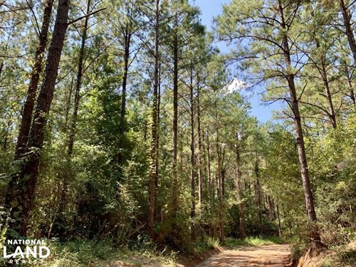 Frankville Hatchetigbee Lake Road : Frankville : Washington County : Alabama