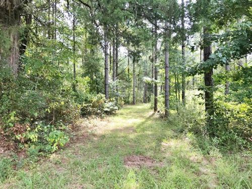 220 Acres Hunting Timberland Proper : Collinsville : Kemper County : Mississippi