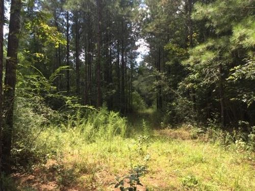 70 Acres Timberland Pike County : Summit : Pike County : Mississippi