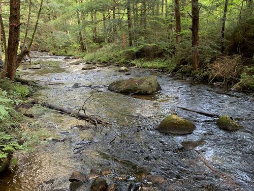 On Muskrat Brook : Remsen : Oneida County : New York