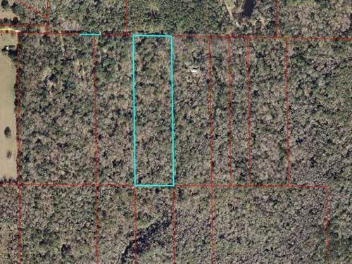 20 Acres 778320 : Inglis : Levy County : Florida