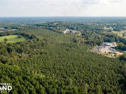 Planted Pines on Hunting or Develop : Salisbury : Rowan County : North Carolina