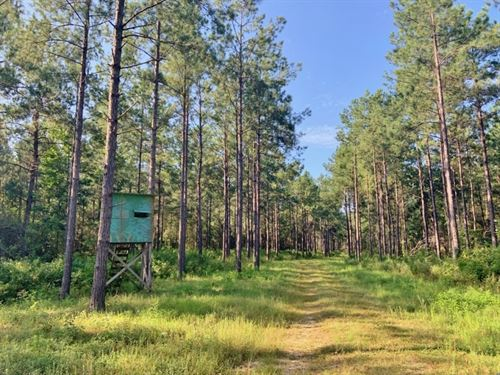 188 Acres Hunting Timber Land : Poplarville : Pearl River County : Mississippi