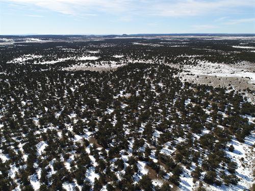 New Mexico Getaway, 5.23 Acre Lot : Pinehill : Cibola County : New Mexico