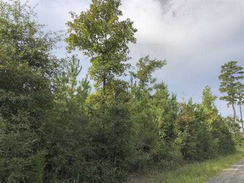 40 Acres Milvid Road : Liberty : Texas