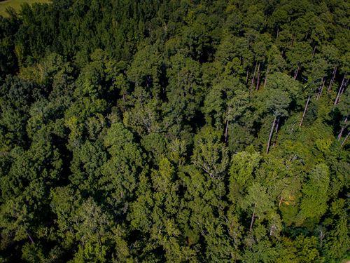 Large Acreage Close To Jordan Lake : New Hill : Chatham County : North Carolina